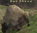 Mad Sheep