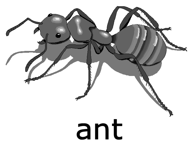 File:Ant on Ordinal Numbers