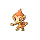 Chimchar DP