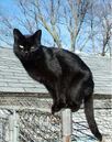 Blackcat-Lilith.jpg