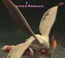 Infected Wamoura