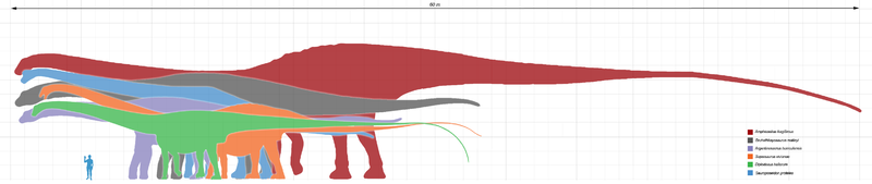 sauropods in terms of ...