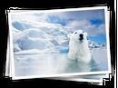 Ajira-polar.png