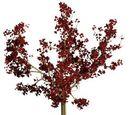 Crumplebottom Prune Tree