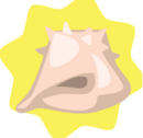 Conch-Shell.png