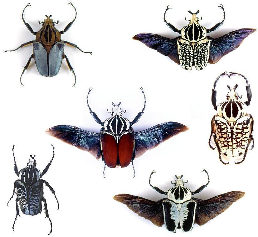 the brown wasps The brown wasps essay - the brown wasps in loren eiseley's essay the brown wasps, eiseley shows that humans and animals act in similar ways he says that humans and animals cling to the things they know very strongly.