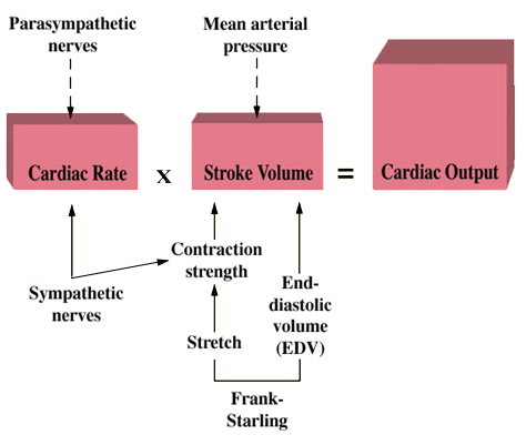 stroke volume diagram variable air volume diagram
