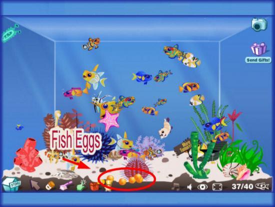 Happy Aquarium Nursery Happy Aquarium Wiki Fish