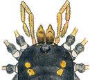 Nemastomatidae