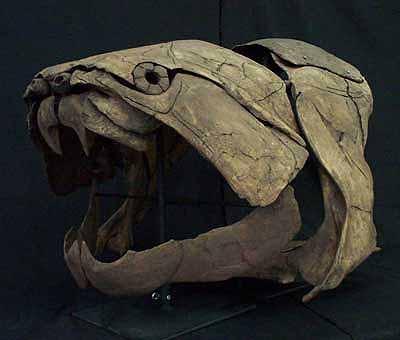 Dunkleosteus_skull.jpg