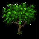 Peach Tree Big-icon.png