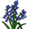 Bluebell-icon