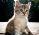 Kitten Care Guide