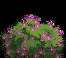 Mountain Ebony Tree