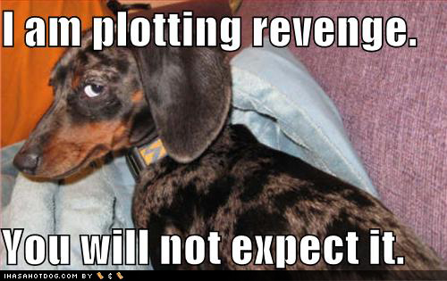 12 Facts Dachshund Lovers Know Heart moreover Dachshund besides File Funny Dog Pictures Plotting Revenge further Breed Of Month Basset Hound additionally Voitures Insolites. on weiner dog races