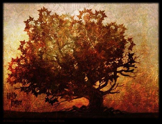 Dh1 the elder tree for Harry elder
