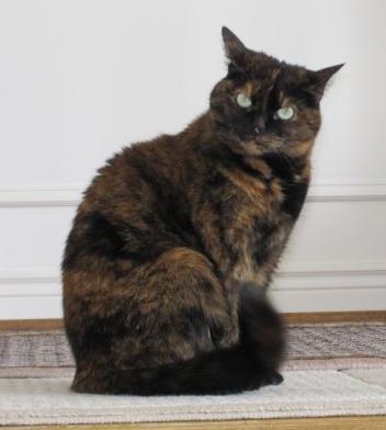 Tortoiseshell cats wiki - Images of tortoiseshell cats ...