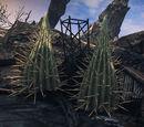 Giant Cacti