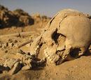 Sand Skeletons
