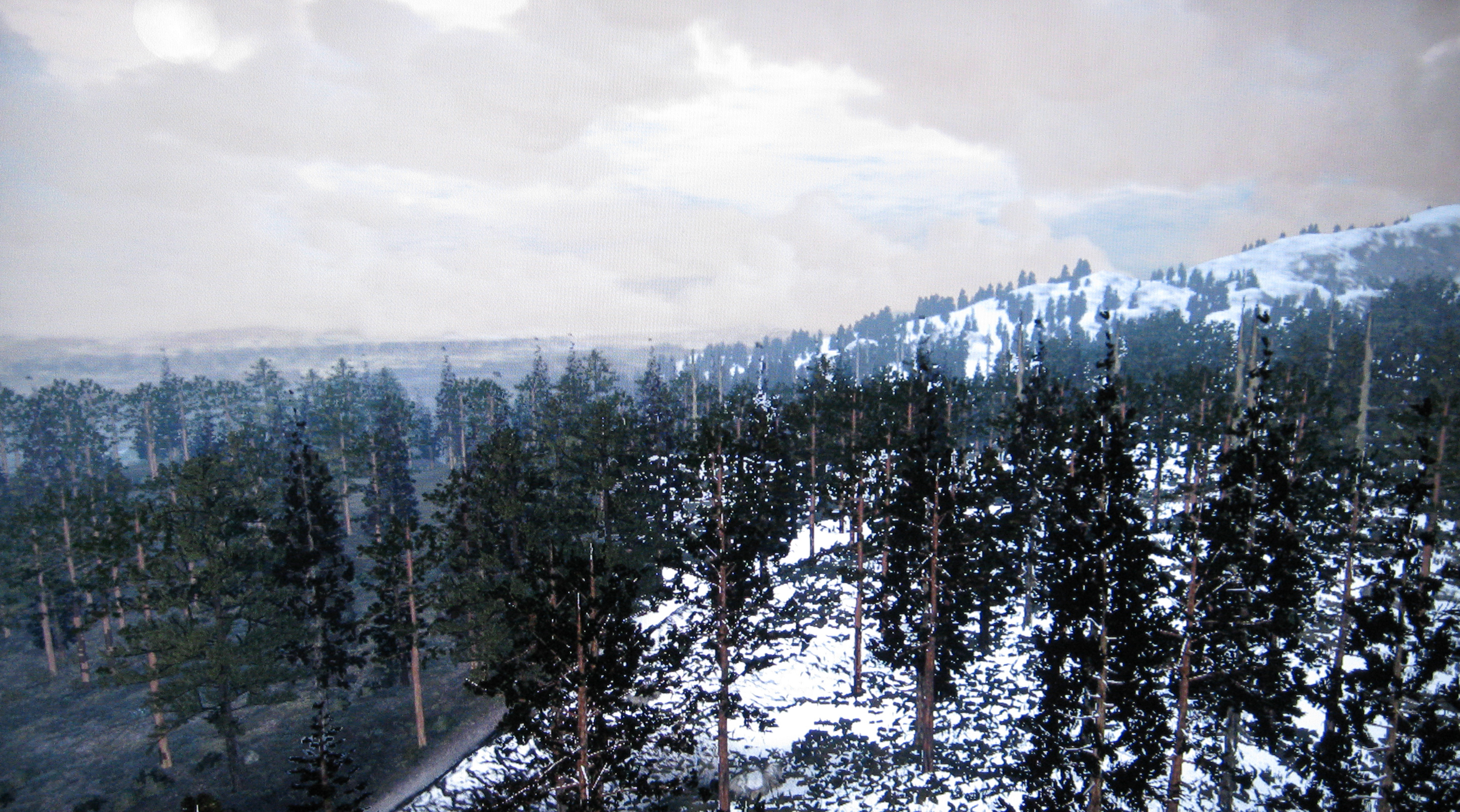 Rdr_tall_trees00.jpg