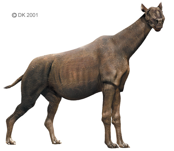 Paraceratherium Dinopedia The Free Dinosaur Encyclopedia