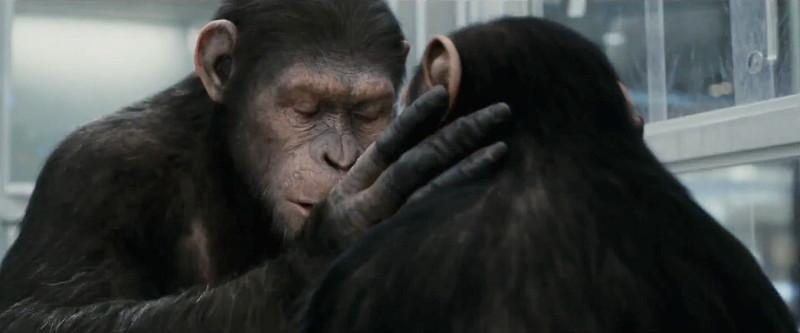 Image - CaesarCornelia.jpg - Planet of the Apes: The ...