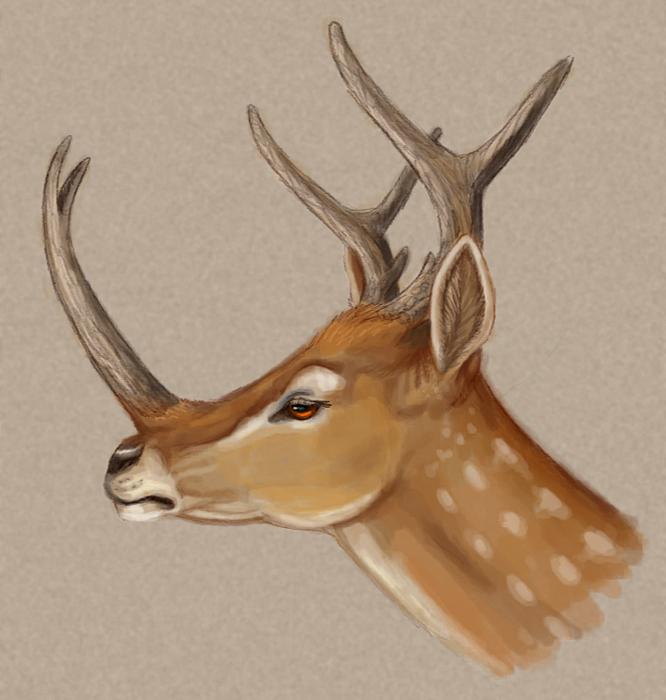 single horned deer Wittenberg