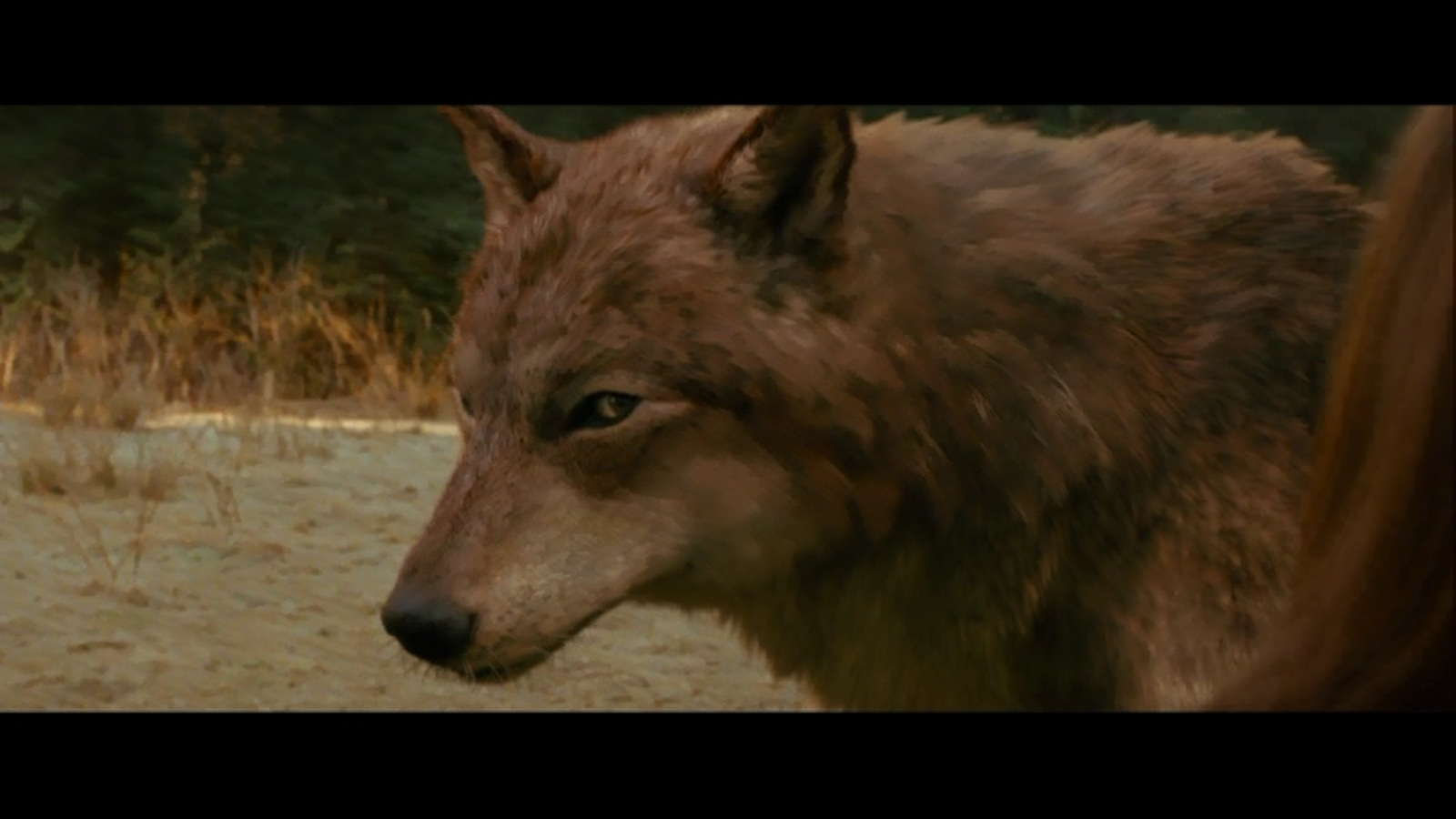 Jacob-wolf-first-time-new-moon