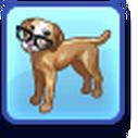 Pet Trait Genius.png