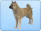 Sims  Dog Breed Curly Coated Retriever