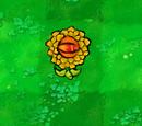Eyera Chrysanthemum