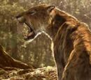 DW: Sabre-toothed Cat