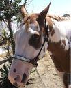 Paint Horse.jpg