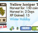 Yellow Juniper Tree