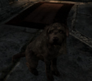Hund (Skyrim)