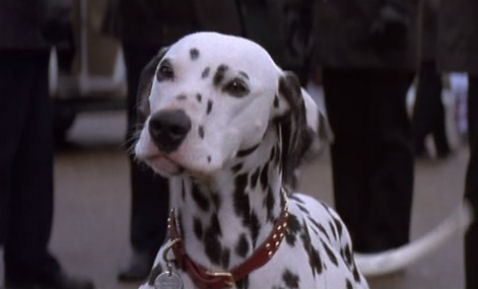 Nanny Dog Reaal Name