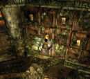 Ruinas amazonas