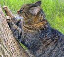 El marcaje de los gatos