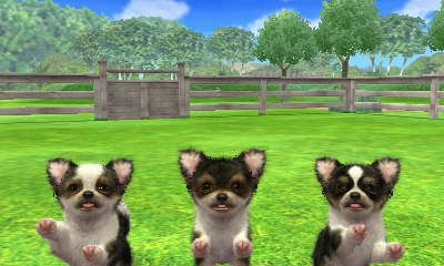 Chihuahua - Nintendogs + Cats Club Wiki