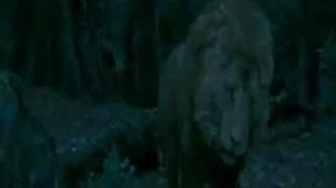 The Chronicles of Narnia Full Movie Part 11