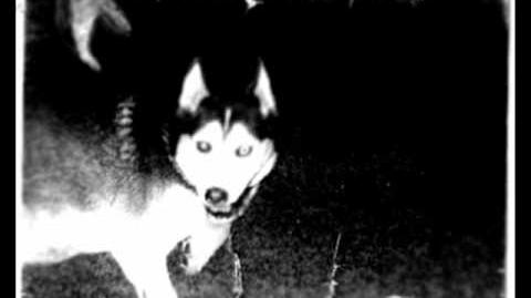 Creepy Smile Video Video Creepypasta Smile Dog