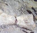 Динозавры Танзании