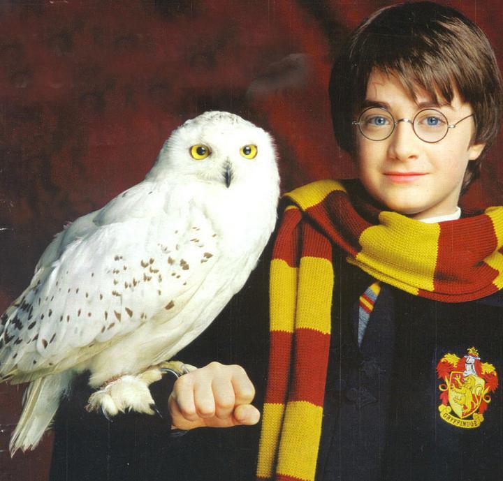 20130612023937!Harry-Potter-Hedwig.jpg