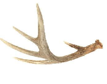 Deer Antler Condemned Wiki