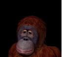 Zwierzęta z The Sims Historie z Bezludnej Wyspy