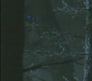 White Walker (The Night Lands)