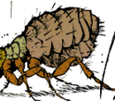 Calvin the Flea