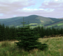 Brentyn Province