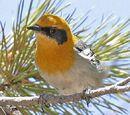 StaraptorEmpoleon/Review: Common mistakes in bird books