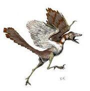 Archeoteryx.jpg